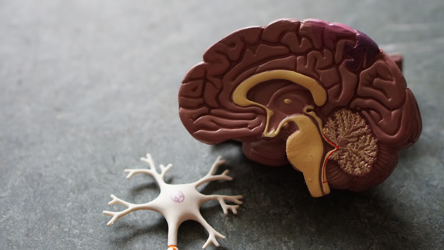 Nerve and Brain